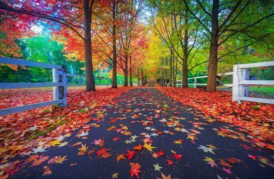 Фото бесплатно природа, листья, дорога