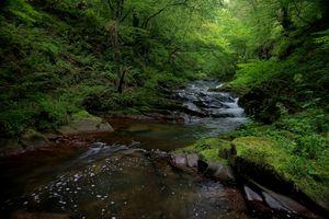 Заставки пруд, река, пейзаж