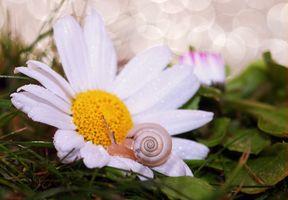 Заставки ромашка, улитка, лес, трава, цвести, растение, цветок, лепесток, животное, маргаритка, макрос, сад, закрыть, флора, оболочка, дикий цветок, цветы, крупным планом, моллюск, существо, беспозвоночные, флористика, макросъемка, раковины улиток, медленно, раковина улитки, цветущее растение, букет цветов, цветочный дизайн, маргаринка, наземный завод, аранжировка цветов