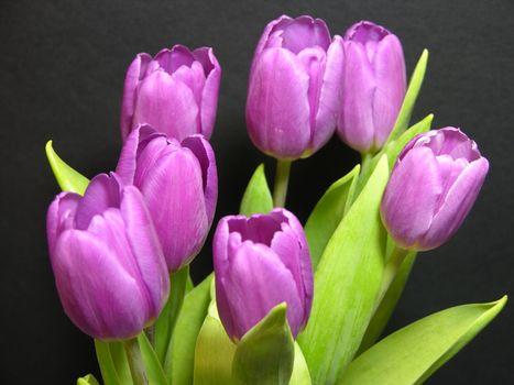 Нежные тюльпаны · бесплатное фото