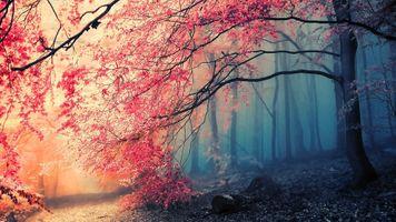 Фото бесплатно осенние ветви, листья, осень, туман, лес, деревья