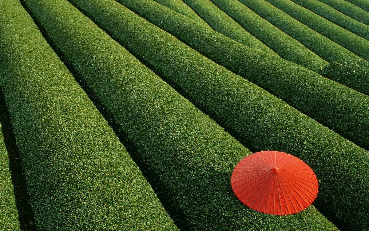 Фото бесплатно поле, Япония, красный - на рабочий стол