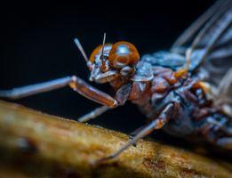 Бесплатные фото макрос,насекомое,макросъемка,беспозвоночный,крупным планом,вредитель,фотография