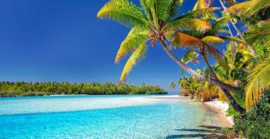 Бесплатные фото острова кука,пляж,пальмовые деревья,песок,море,остров,праздник