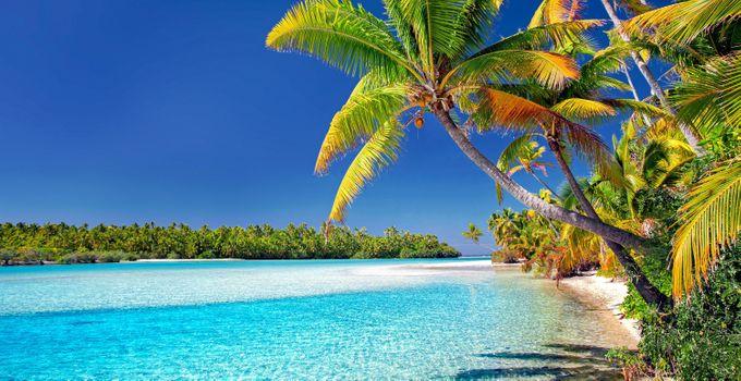 Фото бесплатно острова кука, пляж, пальмовые деревья