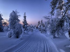Заставки Рука, деревья, снег