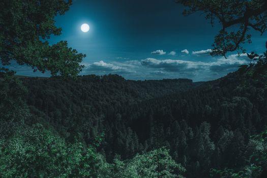 Photo free forest, night, photografie