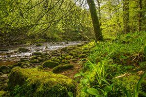 Фото бесплатно лес, деревья, река, камни, природа, пейзаж