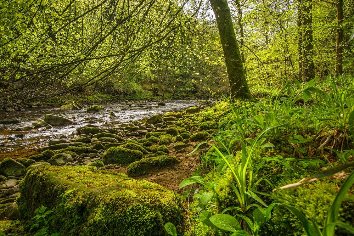 Фото бесплатно лес, деревья, река, камни, природа, пейзаж, пейзажи