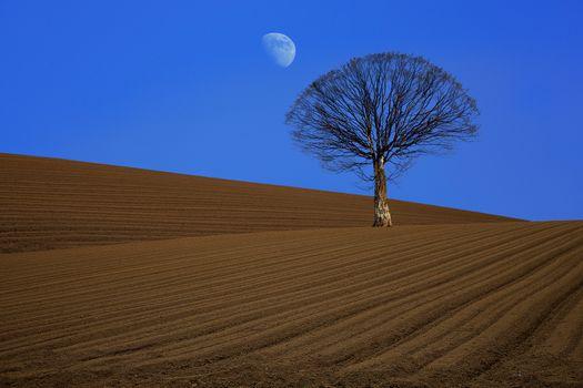 Photo free arable land, tree, moon