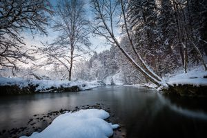 Бесплатные фото река,зима,снег,деревья,природа,пейзаж