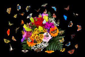 Фото бесплатно цветок, черный фон, оригинальный