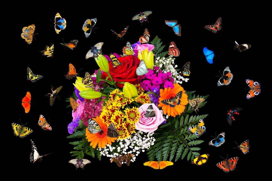 Обои Красивый букет, букет, цветочная композиция, флора, цветы, цветок, цветочный, оригинальный, красочный, праздничный букет, бабочки, чёрный фон на телефон | картинки цветы