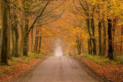 Photo free nature, paints of autumn, landscape
