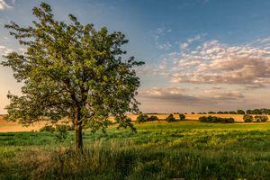Зеленое дерево в поле · бесплатное фото