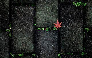 Фото бесплатно аннотация, осень, цвет