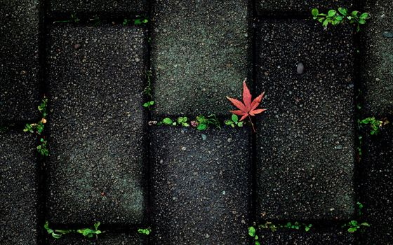 Заставки аннотация, осень, цвет