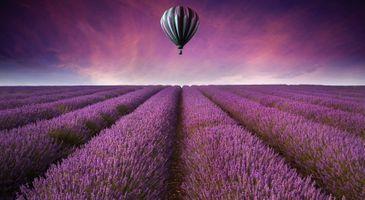 Фото бесплатно воздух, воздушный шар, поле, поля, цветы, пейзаж, природа, фиолетовый, небо