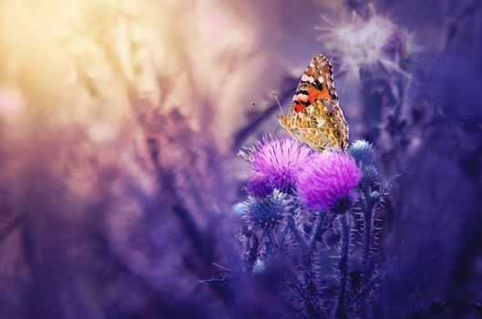 Photo free butterfly, macro, Thistle