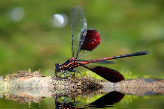 Фото бесплатно стрекоза, отражение, насекомые
