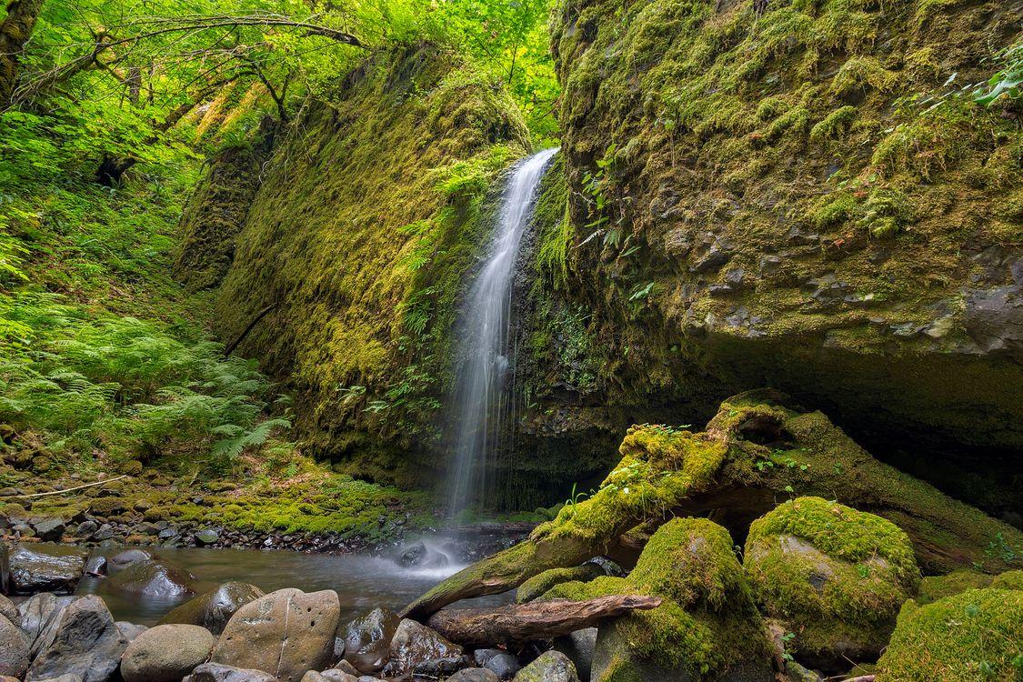 Фото бесплатно Водопад, Мшистый Грот, Ручей Руккель в ущелье реки Колумбия, Columbia River Gorge, камни, лес, деревья, природа, пейзаж, пейзажи - скачать на рабочий стол