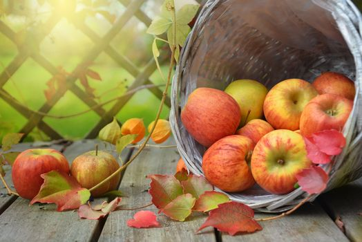 Autumn apples in a basket · free photo