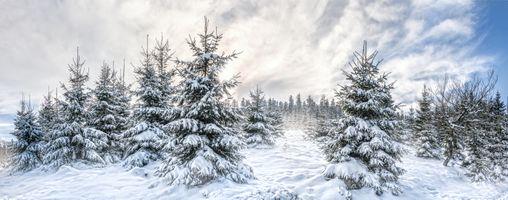 Бесплатные фото зима,ёлки,ели,деревья,снег,сугробы,пейзаж