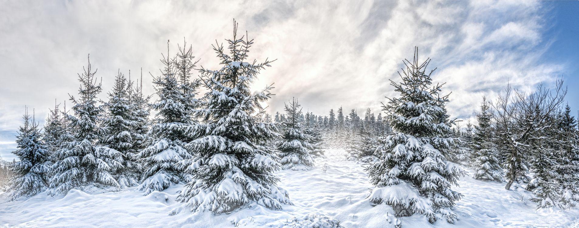 Фото бесплатно зима, ёлки, ели, деревья, снег, сугробы, пейзаж, панорама, пейзажи - скачать на рабочий стол