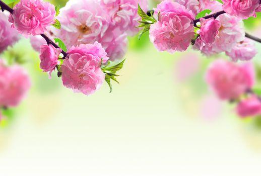 Фото бесплатно ветки, цветение, цветы