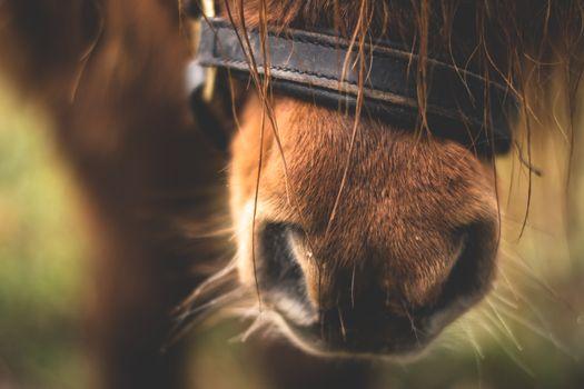 Фото бесплатно лошадь, нос, макро