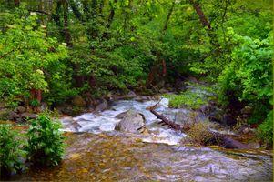 Фото бесплатно лес, природа, волшебная река