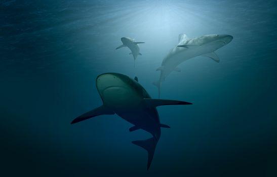 Фото бесплатно акулы, рыбы, животные