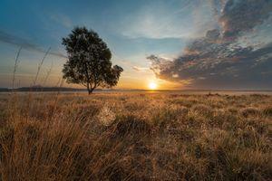 Фото бесплатно закат, поле, трава, дерево, небо, солнце, природа, пейзаж
