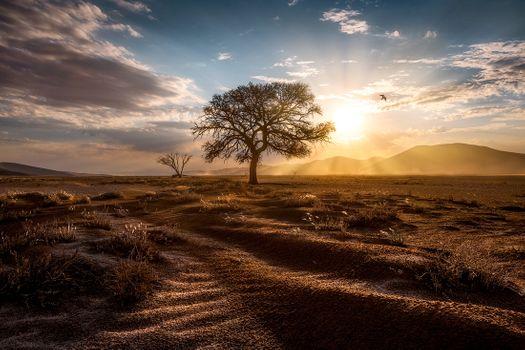 Photo free Africa, desert, tree