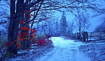 Бесплатные фото пейзаж,зима,осень,дорога,деревья,забор,природа