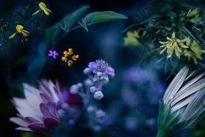 Фото бесплатно природа, поле, разнообразие