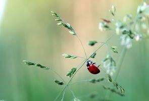 Бесплатные фото растение,божья коровка,макро,насекомое,зелёный,трава