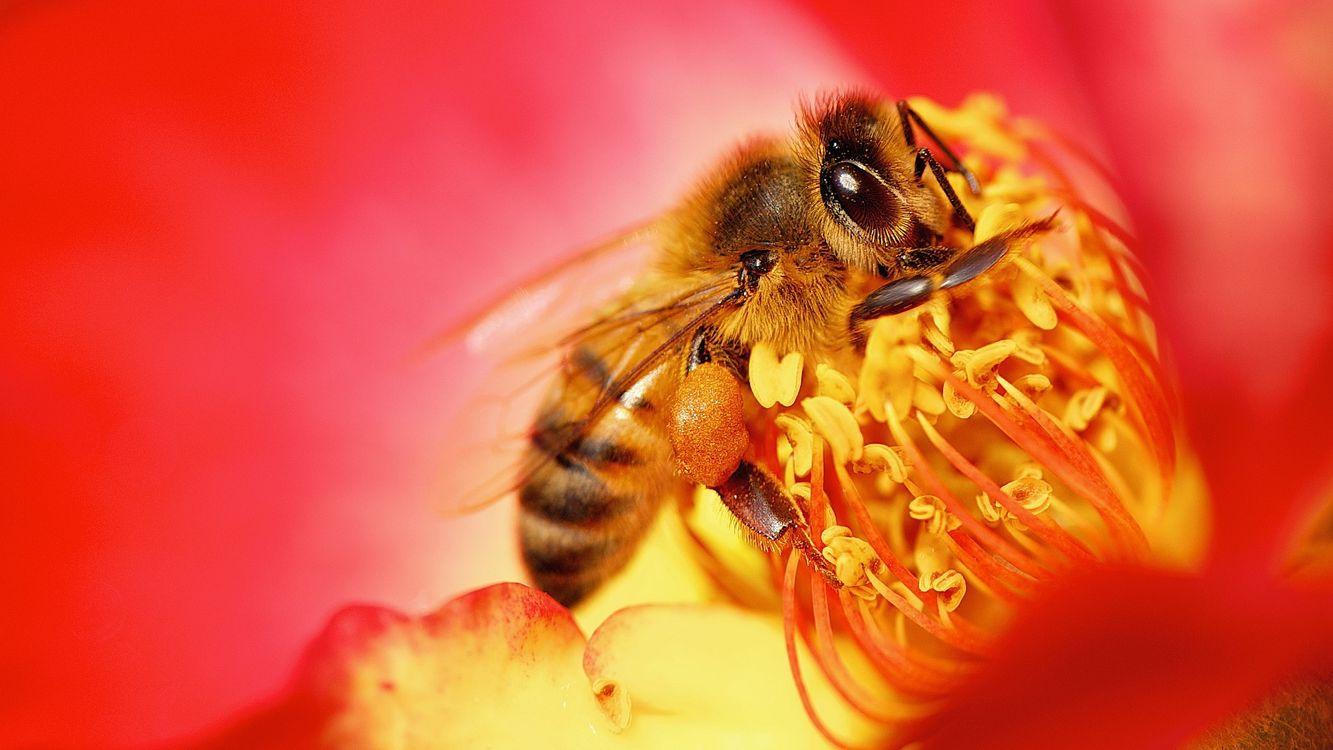 Фото бесплатно оса, нектар, цветок - на рабочий стол