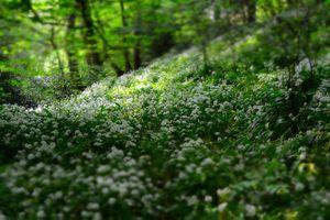 Фото бесплатно глубина резкости, поле, флора
