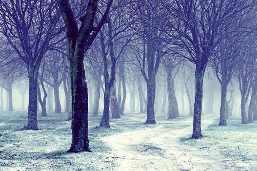Холодный зимний лес