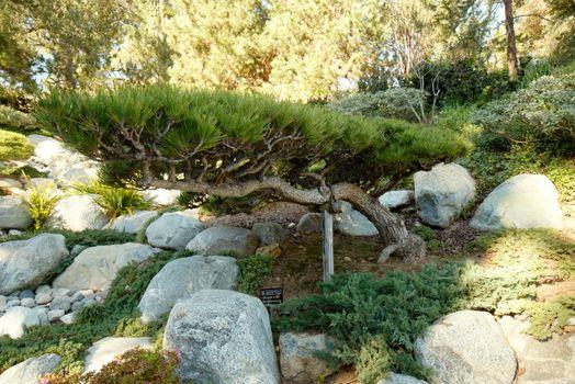 Бесплатные фото Камни,деревья,трава
