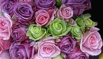 Атласные розы