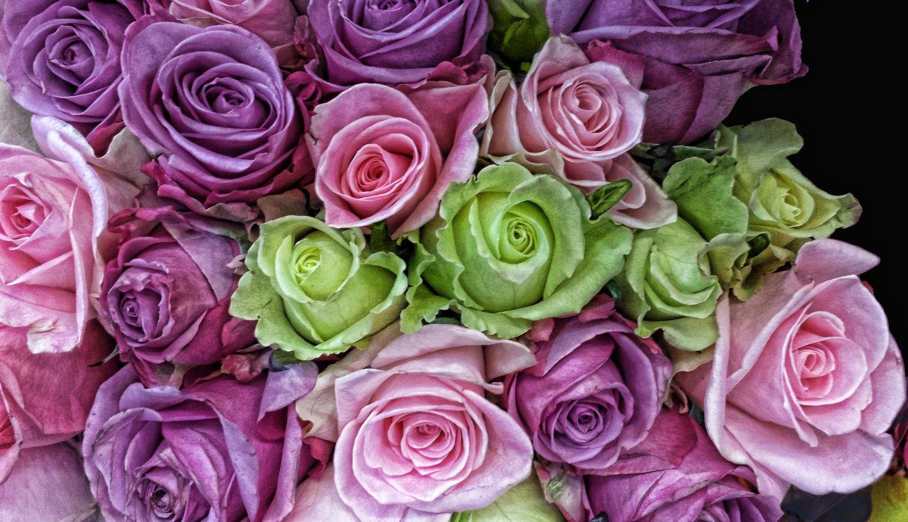 Атласные розы · бесплатное фото