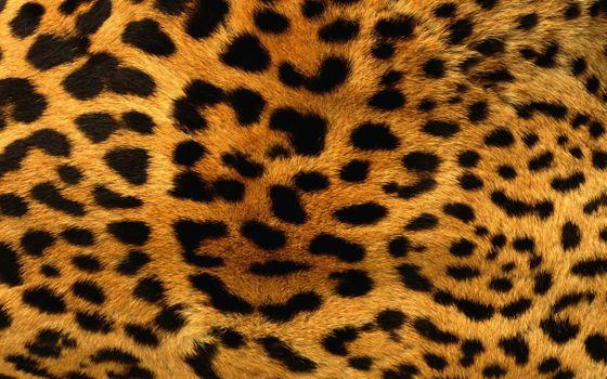 Фото бесплатно пятна, мех, леопард