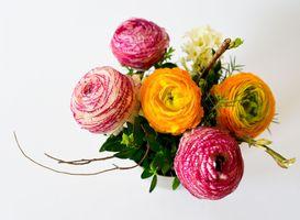 Заставки лепесток, цветок, цветы