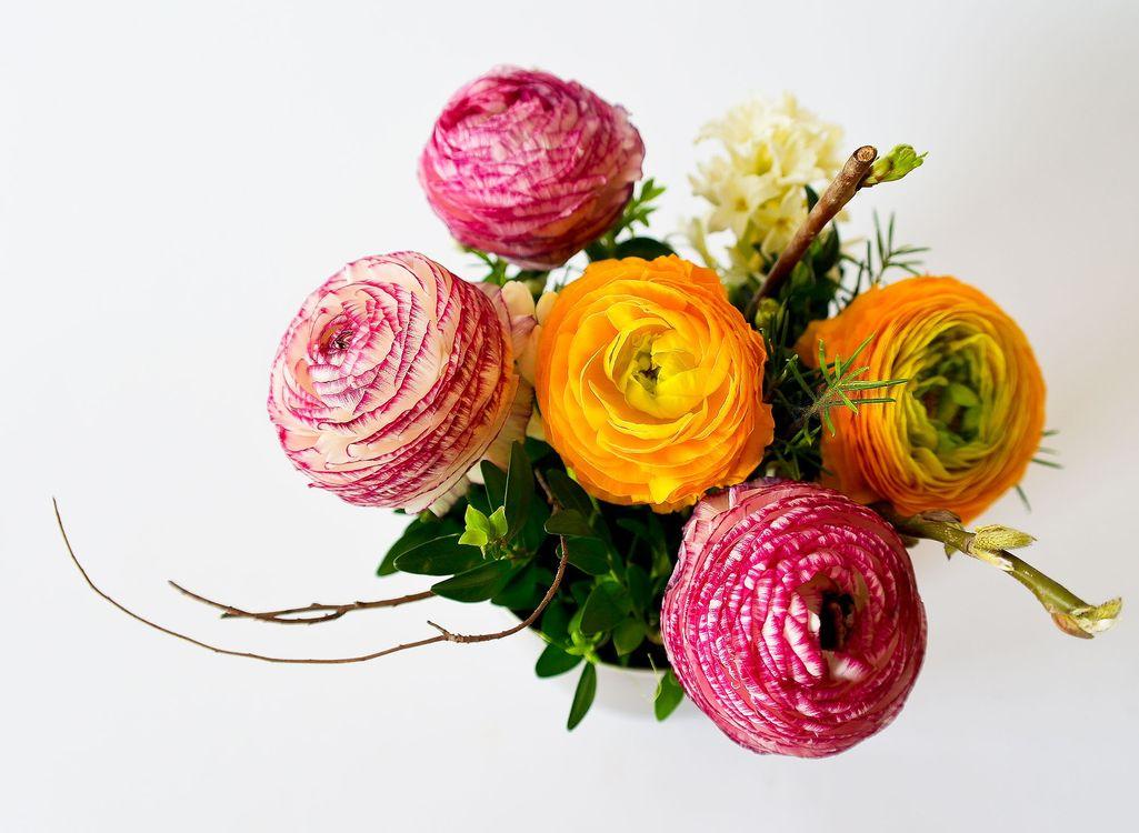 Фото лепесток цветок цветы - бесплатные картинки на Fonwall