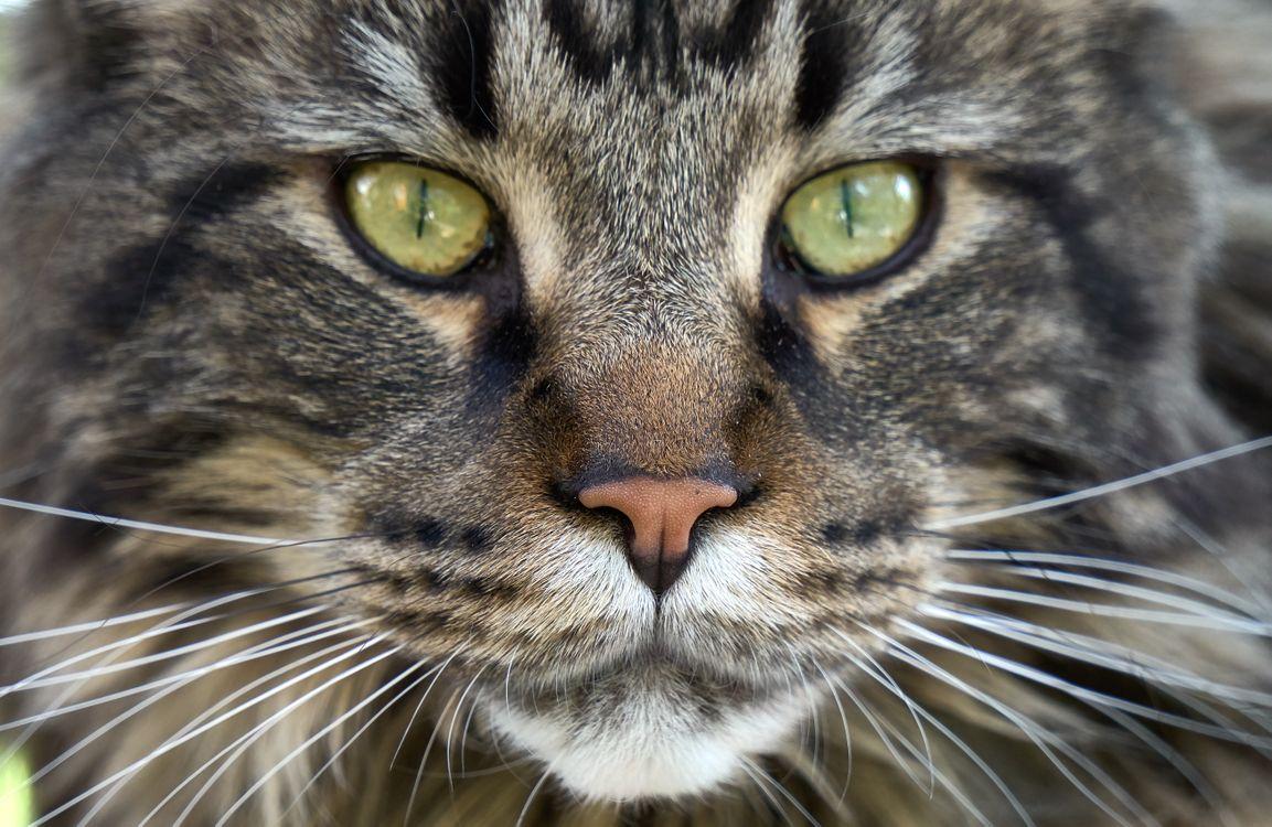 Фото бесплатно кот, усы, глаза, нос, кошка, животное, морда, взгляд, кошки