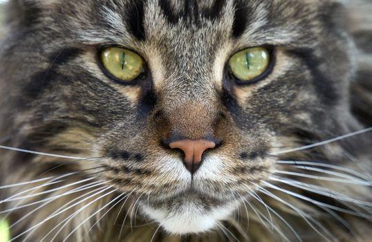 Заставки кот, усы, глаза