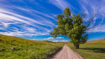 Одинокое дерево у дороги · бесплатное фото