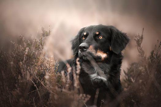 Черная аусси · бесплатное фото